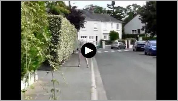 MILF Shitting in the Street while Walking